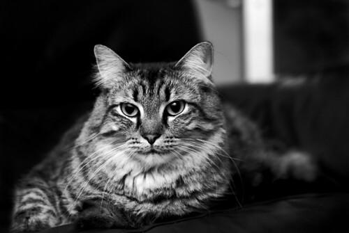 Cute World Map Desktop Wallpaper Cat In Black Amp White Steve Garner Flickr