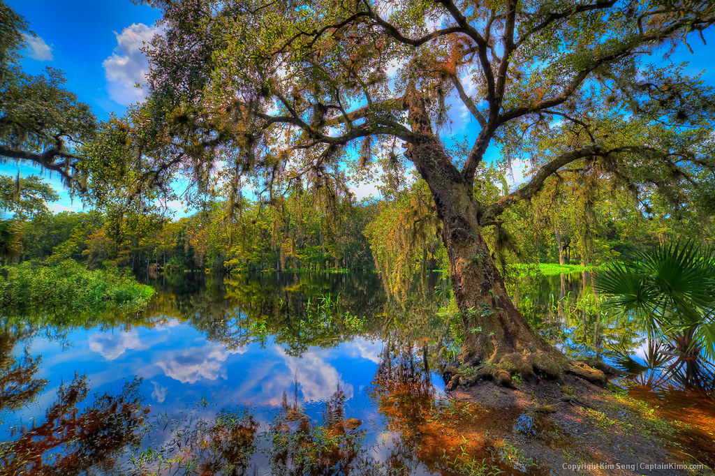 3d Wallpaper Live Wallpaper Live Oak Growing Over Fisheating Creek River At Palmdale F