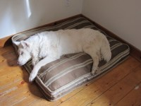 old Ariel | Finally figured out how the dog bed works ...