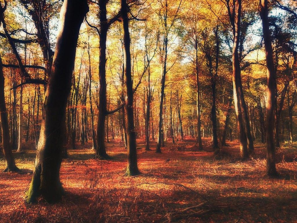 Sunrise 3d Wallpaper English Woodland In Autumn Sagesolar Flickr