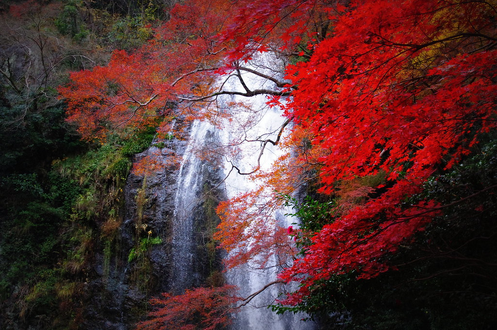 Waterfalls Desktop Wallpaper Forest Falls 箕面滝 Minoh Waterfall Mino Waterfall Is Situated On Top