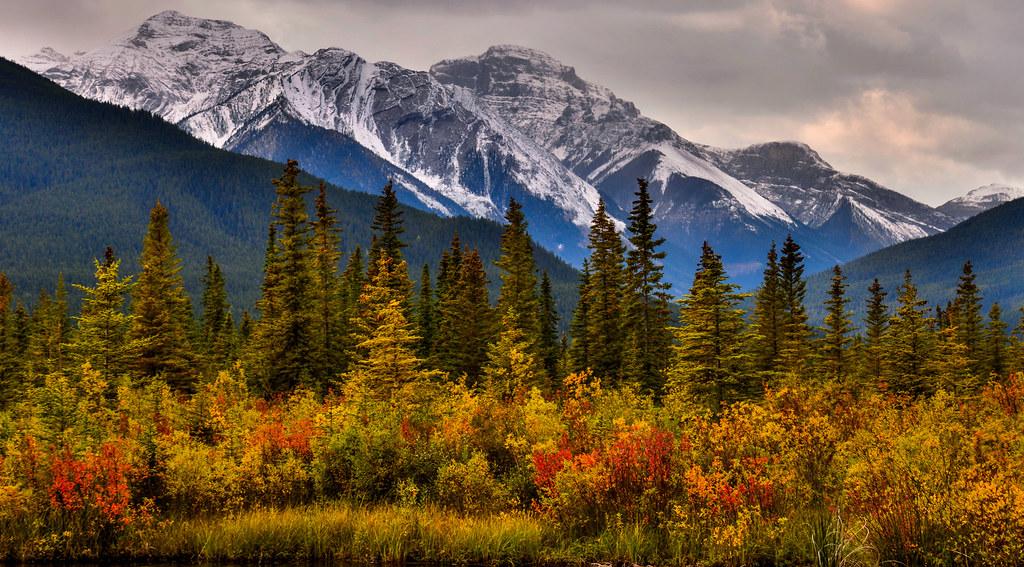 Fall Landscape Wallpaper Portrait Of Autumn Banff National Park Alberta Canada
