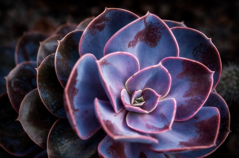 3d Wallpaper Blue Red Manito Succulent I Finally Made Some Time To Visit