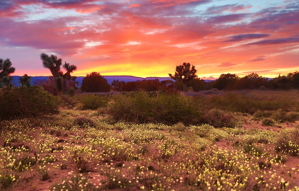 Heat Wallpaper Hd Early Spring Rennett Stowe Flickr