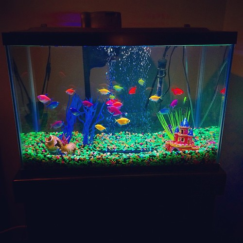 Fish Tank 3d Wallpaper The Perks Of Working For A Pet Company I Brought Home A