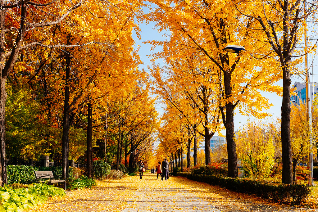 Fall Landscape Wallpaper Autumn In Seoul Twitter Tumblr Facebook Getty