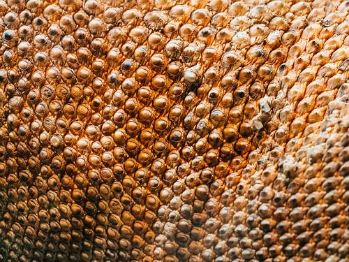 K 3d Wallpaper Komodo Dragon Skin Brian Dewey Flickr