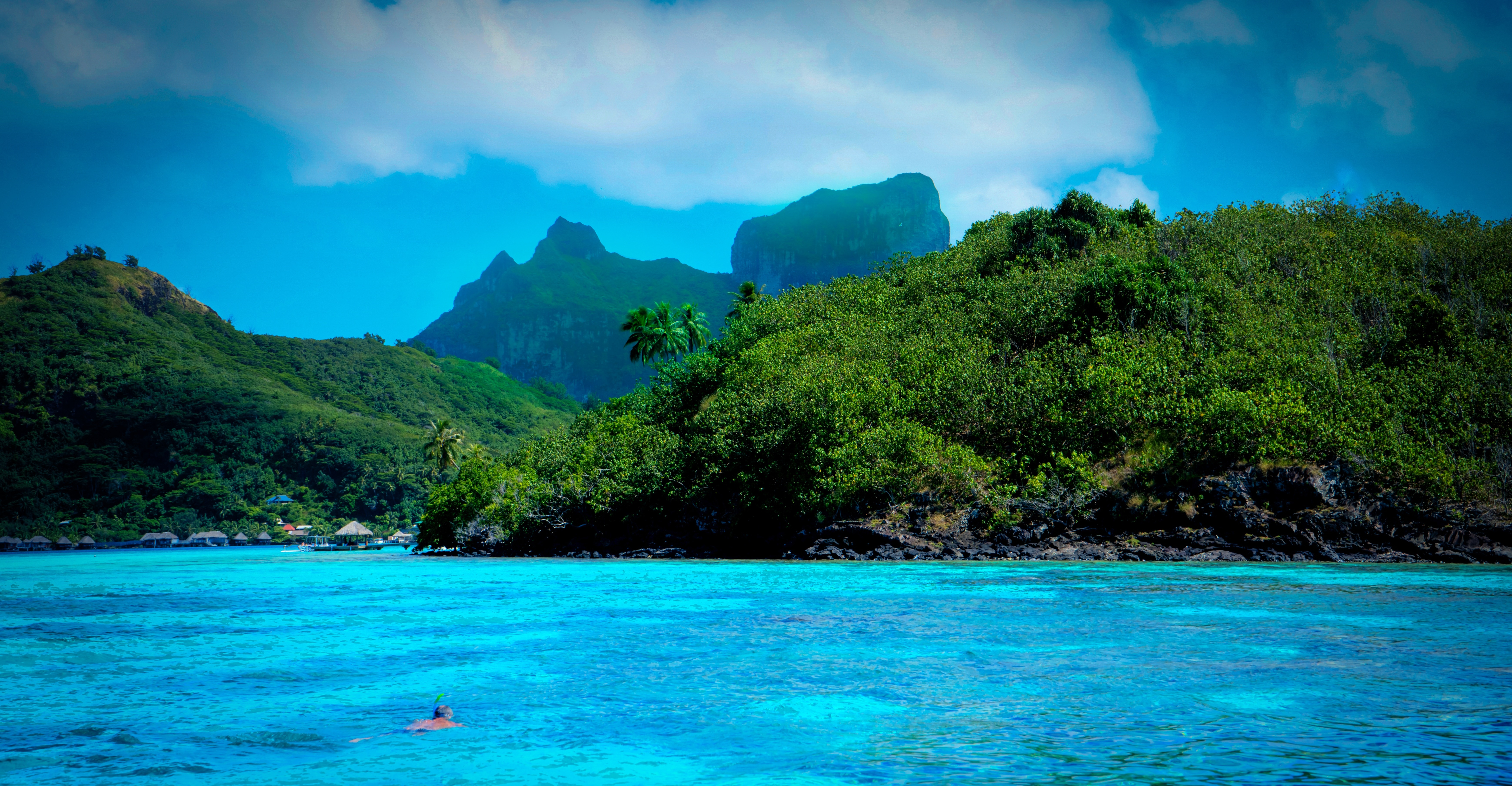 Creative Hd Wallpapers Free Download Tree Covered Mountains And Ocean Free Image Peakpx