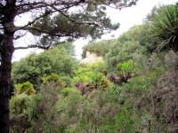 Alum Chine Tropical Gardens, Bournemouth, Dorset, England ...