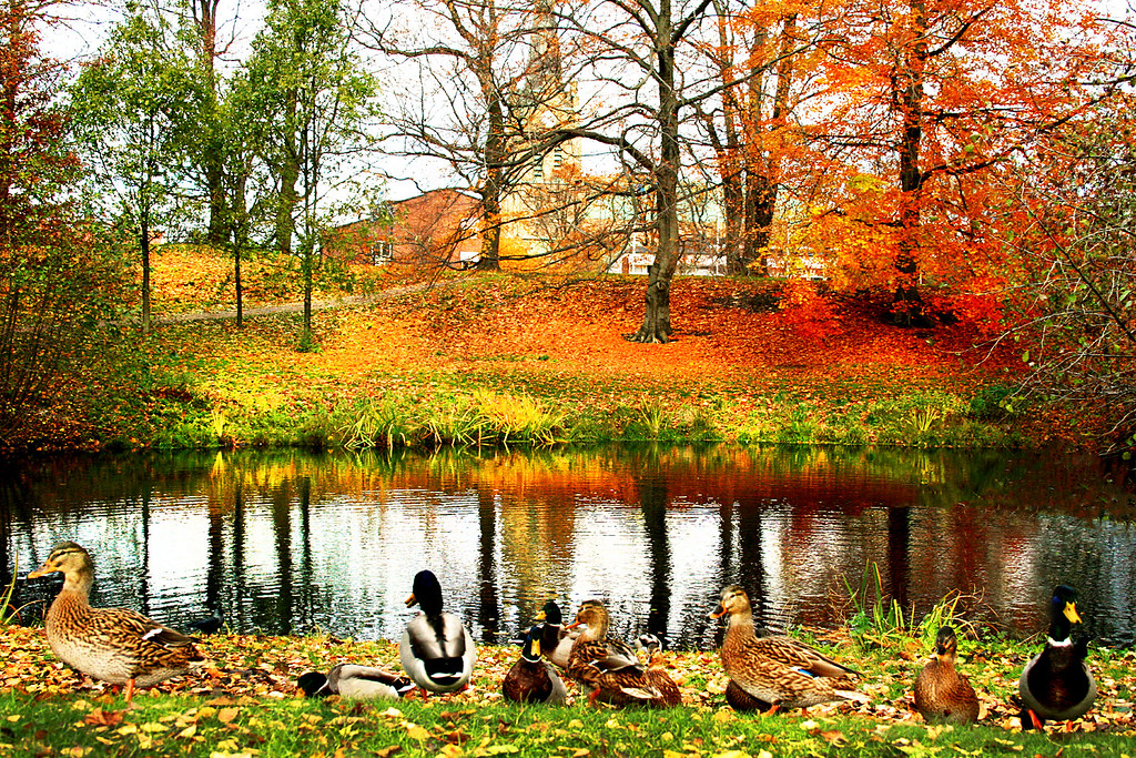 3d Tree Live Wallpaper Colorful Fall Afternoon In Sweden My Husband Had To Do A