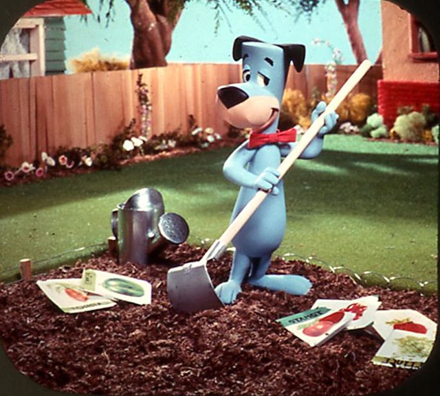 3d Bear Wallpaper Huckleberry Hound Viewmaster Great Pic Huh From The