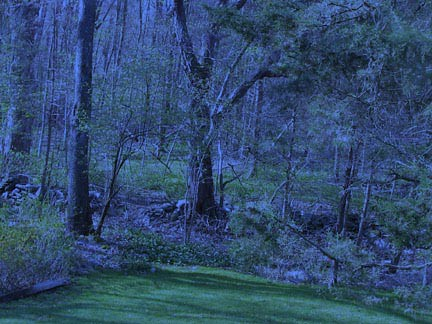 Fall Scenery Wallpapers Free Enchanted Forest At Night View From My Yard
