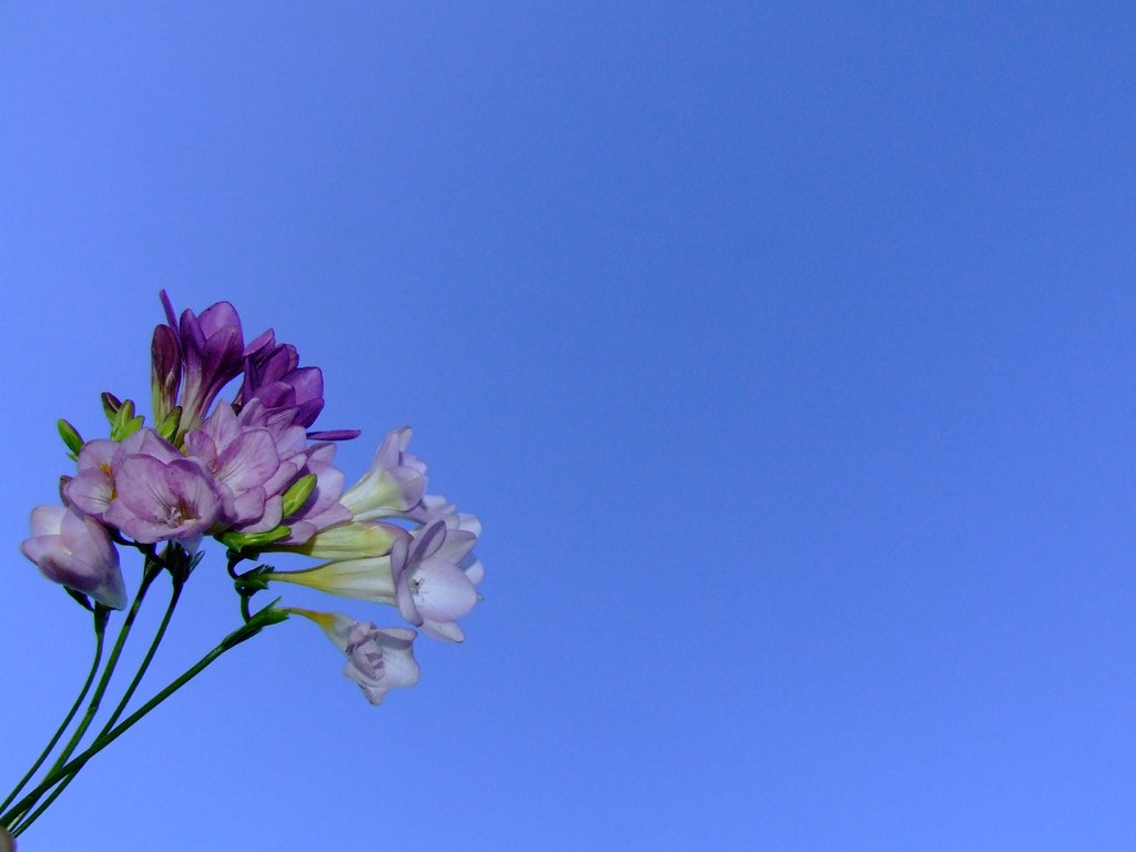 Free 3d Hd Wallpapers For Mobile Spring Flowers Against Blue Sky Background I Have Been
