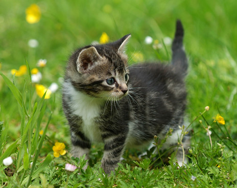 3d Cute Cat Wallpaper Nr39990 Jonge Poesje In Het Gras Rob Doolaard Flickr