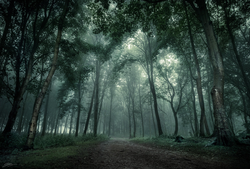 Fall Wooded Wallpaper Top 10 Horror Movies To Watch This Fall