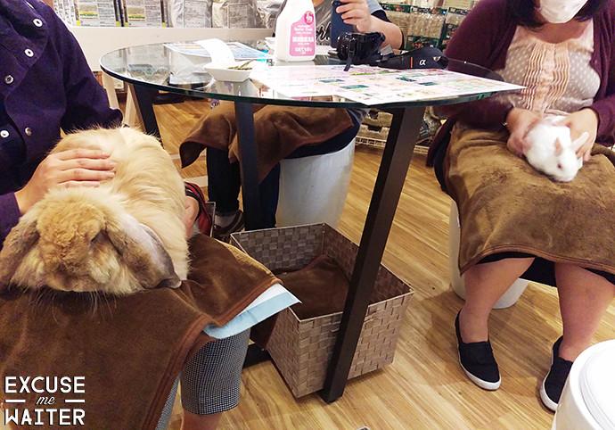 Cheapest Dog Walking Seaford Area