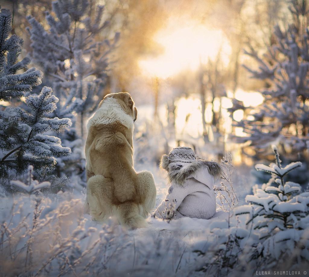 3d Xmas Wallpaper Free Frosty Morning Elena Shumilova Flickr