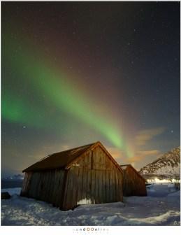 aurora boealis lofoten laukvik