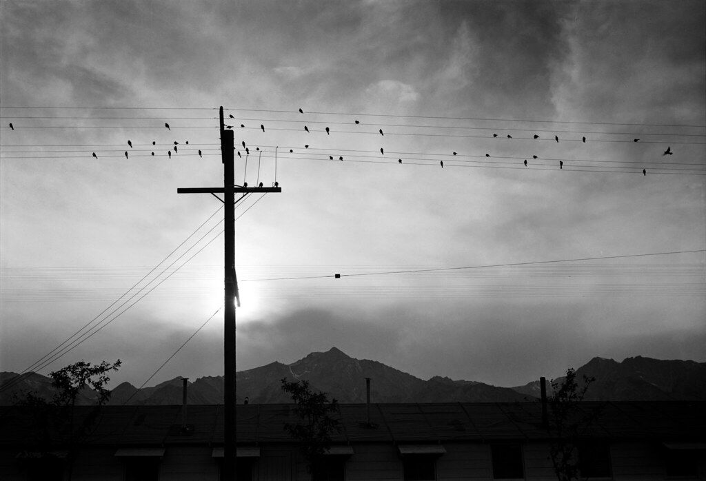 3d War Wallpaper Ansel Adams Birds On Wire Evening Manzanar 1943 Flickr
