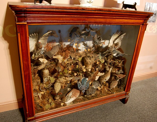 3d Bear Wallpaper Victorian Taxidermy Bird Display A Case Cramped With