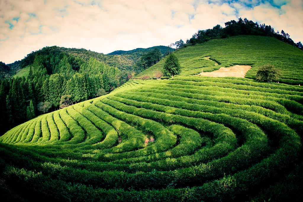 3d Wallpaper In Pakistan 3rd Day Boseong Green Tea Farm We Went To A Vacation