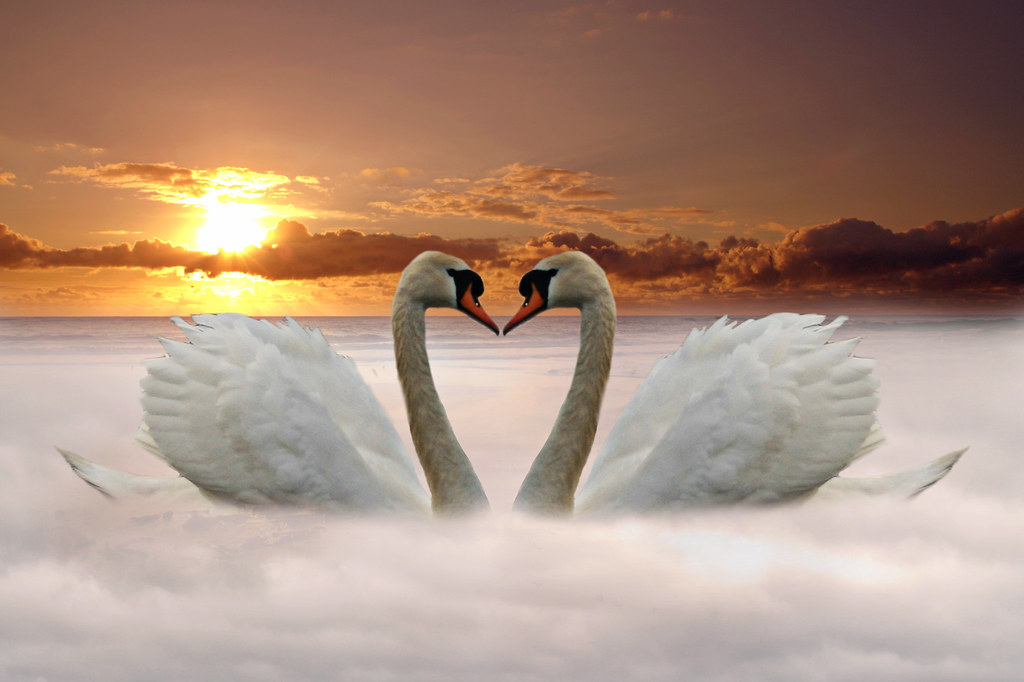3d Art Mobile Wallpaper Swan Love In Explore Best Viewed Large 169 All Rights