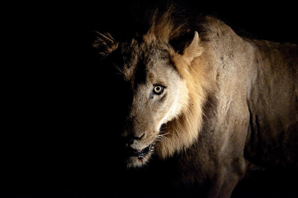 Diablo Hd Wallpaper Lion In The Dark Chris Eason Flickr