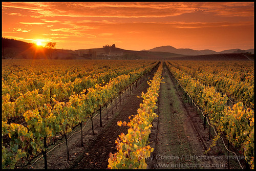 3d Landescape Mural Wallpaper Carneros Napa Valley Vineyard Sunset California