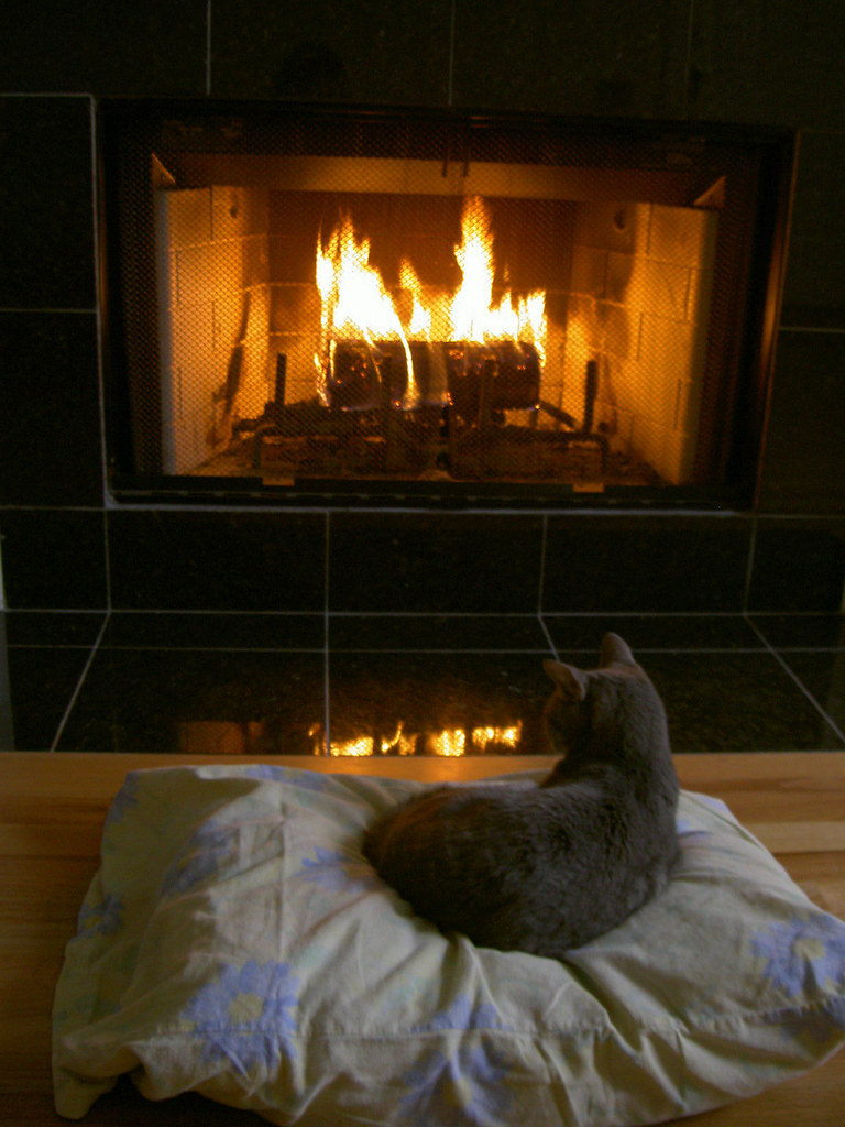 3d Wallpaper White Brick Cat Sitting By The Fire My Darling Little Rosa Here