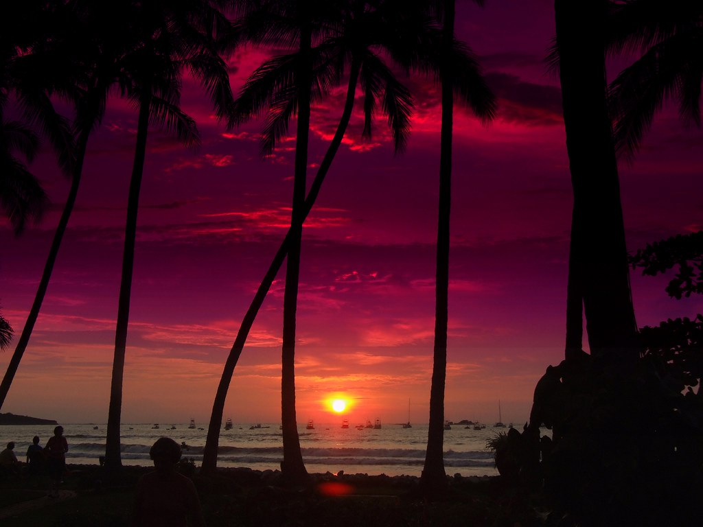 Cute Palm Tree Wallpaper Breathtaking Costa Rican Sunset Front Page 1001 Nights