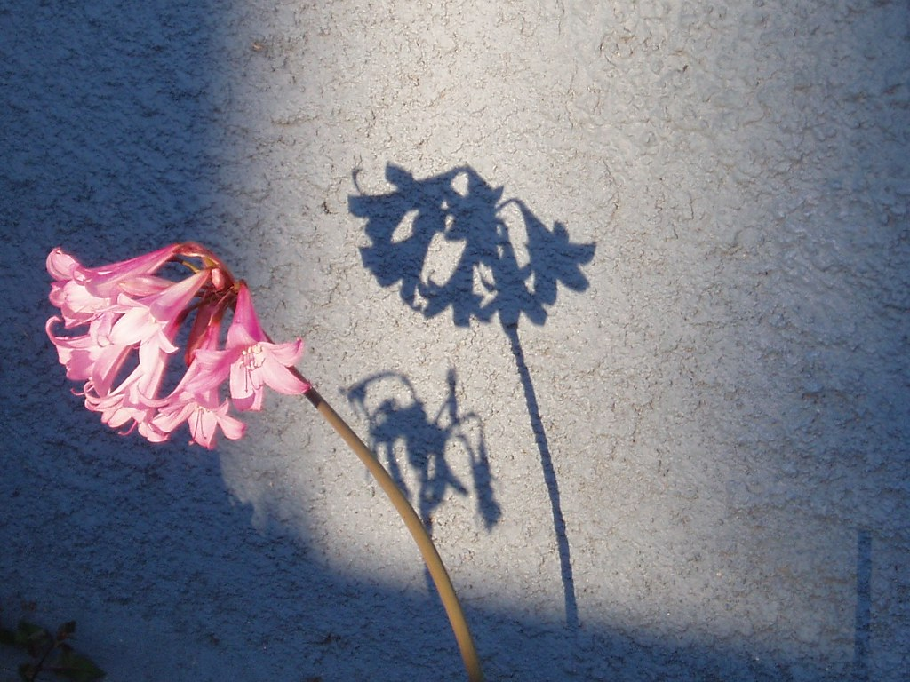 Free 3d Flower Wallpaper Flower Shadow Tom Hilton Flickr