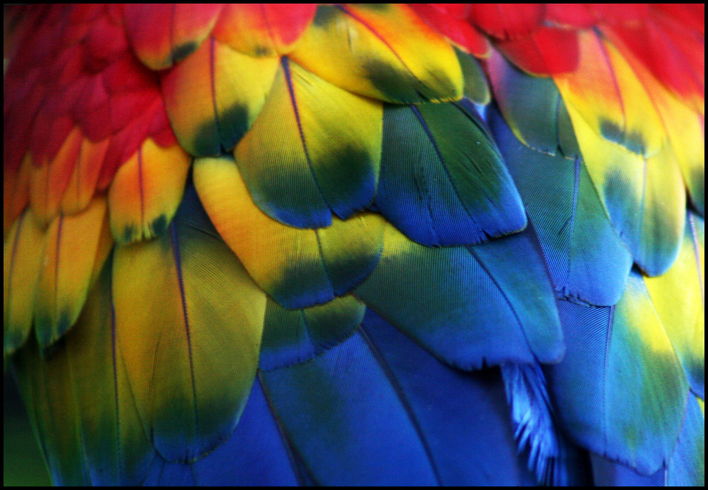 3d Wallpaper Colourful Colourful Feathers Rafa From Brazil Flickr