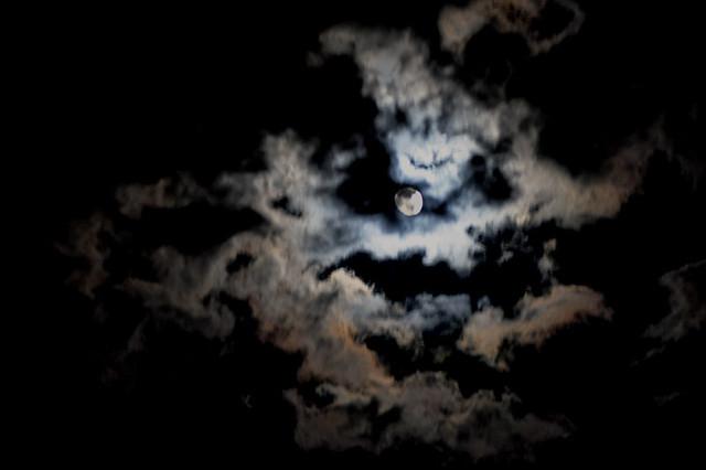 Dark Forest 3d Wallpaper The Creepy Night Sky It S Beautiful But Still A Little