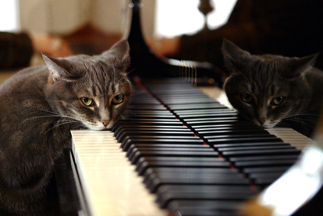 Hd Cute Kitten Wallpaper Nora The Famous Piano Playing Cat Shoot For Ph