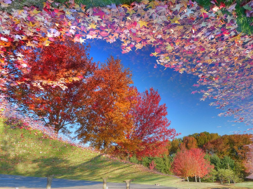 Free Fall Wallpaper Reflecting On The Change Of Seasons Nj A Puddle In The
