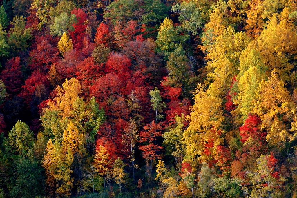 Japan Fall Colors Wallpaper Whirlpool Rapids Niagara Reto Fetz Flickr