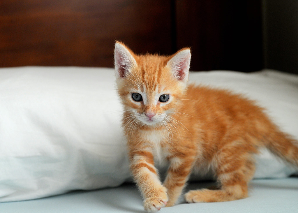 Cute Baby And Baba Wallpaper Baby Ginger Cat I Had To Ps His Face Because He Is