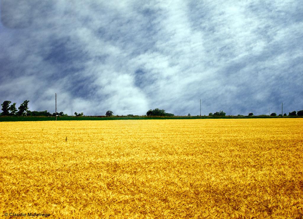Free 3d Fall Wallpaper Cielos Y Campos De La Pampa Argentina 3 Skies And Fields