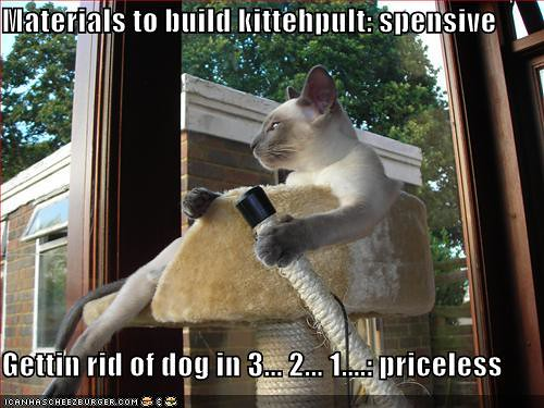Pitbulls And Girls Wallpaper Funny Pictures Cat Gets Rid Of Dog With Catapult Zebedee