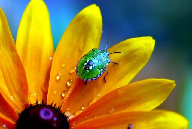 3d Colour Wallpaper Summer Colours Flower Nature Stink Bug Nezara Viridula