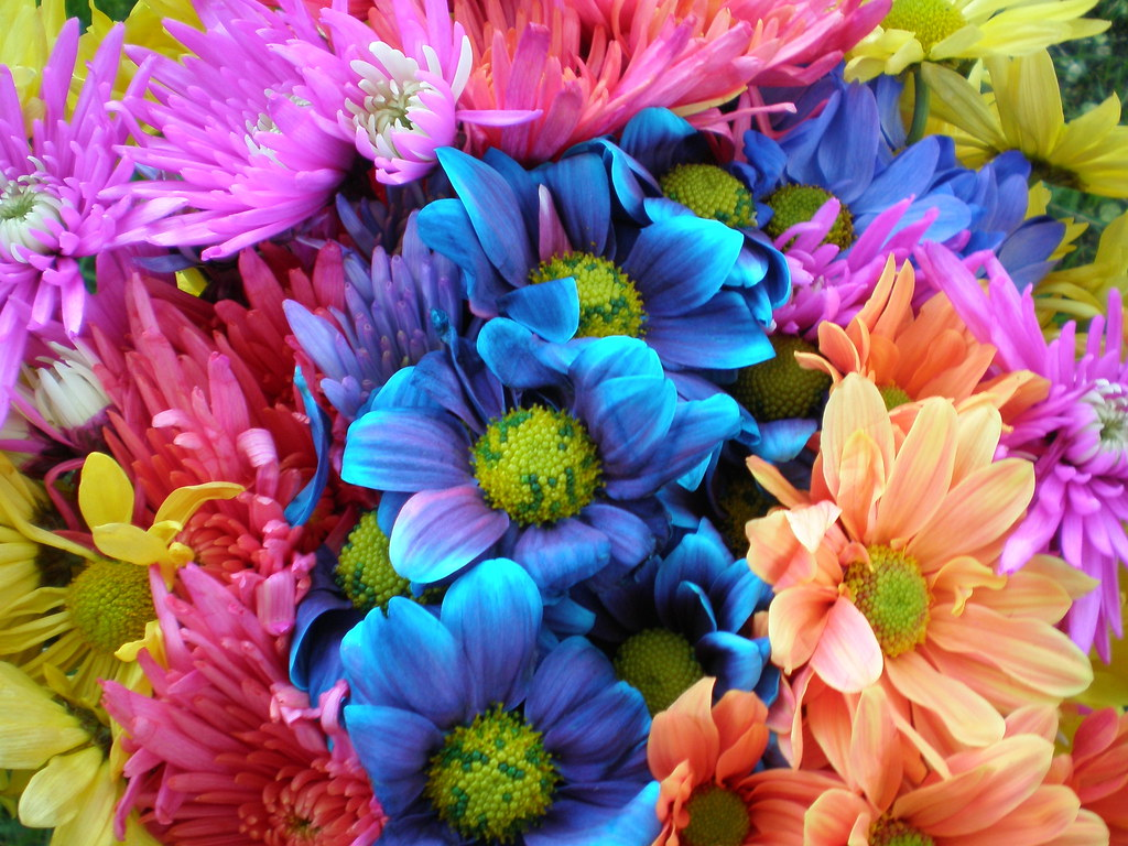 3d Flowers Wallpapers For Pc Colorful Crazy Daisies 1 Colorful Daisies Kaz Andrew