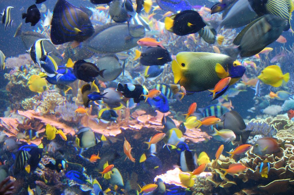 3d Fish Tank Wallpaper Tropical Fish Rich Brooks Flickr