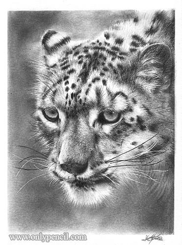 Black Wolf Wallpaper Snow Leopard Pencil Drawing Size 5 Quot X7 Quot Medium Pencil