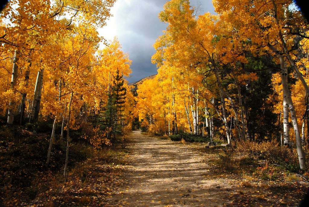 Fall Wooded Wallpaper Fall Aspens On Road 2 Photos From Aspen Colorado And