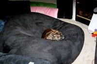 Dog Bed?   The world's biggest dog bed?   Sara N   Flickr