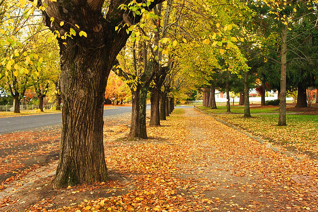 Kentucky Fall Wallpaper Beechworth Victoria Australia Loch Street Autumn Img 9