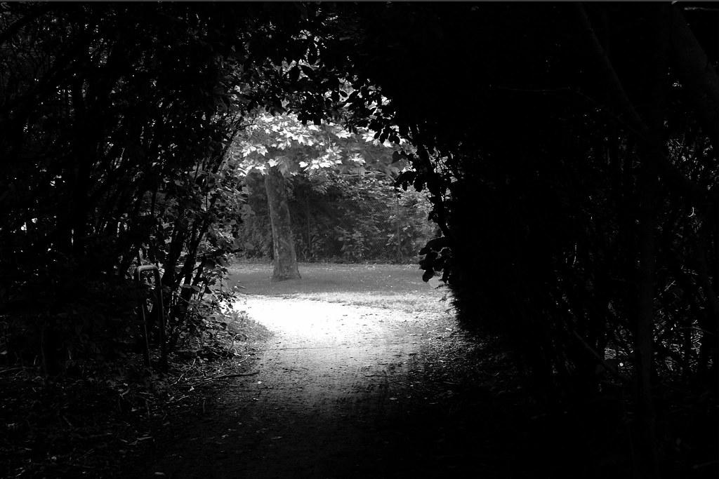 Om 3d Wallpaper Hd Light Behind Dark Tunnel Of Trees Light Behind Dark