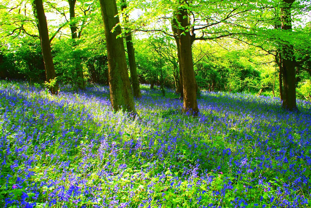 Fall Witch Wallpaper Bluebell Forest Facebook Photography Fan Page Become A