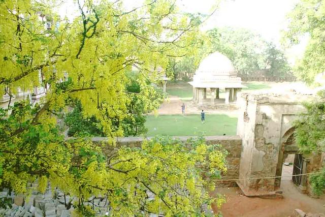 City Season – Amaltas Tree, Hauz Khas Village