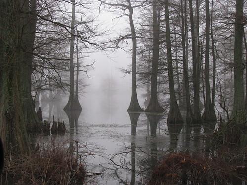 Dark Wallpaper 3d Foggy Swamp Flickr Photo Sharing